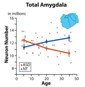 a review of amygdala activity at correlated with long term free recall of emotional information D keator, university of california, irvine, psychiatry and human behavior department, faculty member  amygdala activity at encoding correlated with long-term.